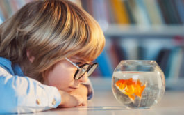 Young student staring at a small bowl containing pet goldfish