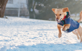 dog toys for winter play