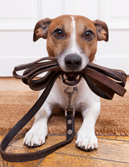 Using training pads will reduce the stress of owning a new puppy