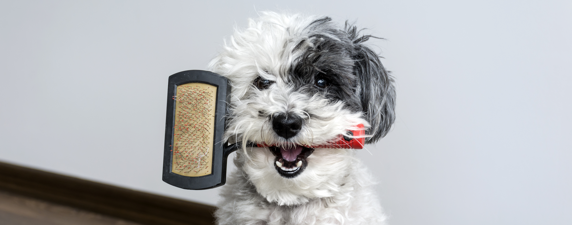 Hairbrushes for dogs: how to choose