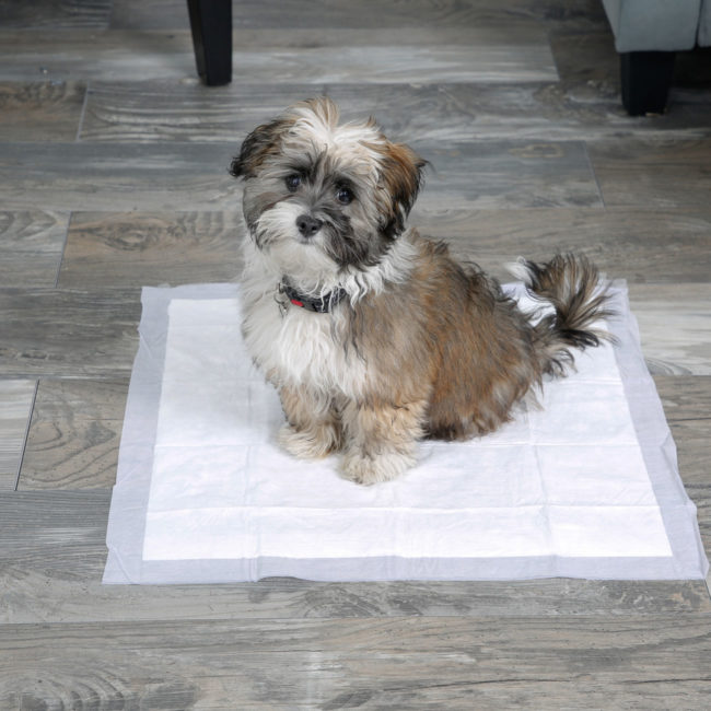 Dog posing on a Hartz Home Protection Odor Eliminating dog pad.