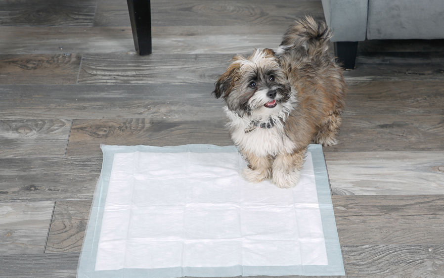 Hartz Home Protection unscented dog pads provide protection for you and your home.