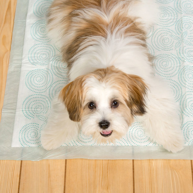 Happy dog posing on a Hartz Home Protection Quilted Plus dog pad.