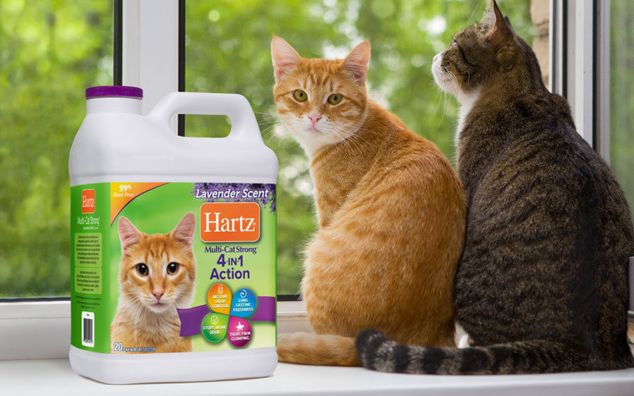 Two cats sitting by a window with Hartz Multi Cat Strong cat litter.