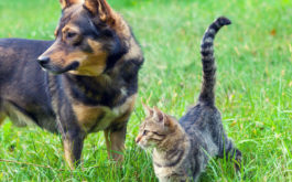 Dog and cat standing in grass. Now is the time to learn about dog tick treatment and flea treatments for cats.
