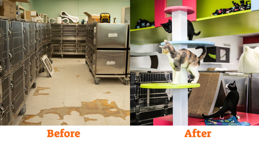 hartz rescue rebuild cats