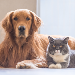 a cat and a dog can become infected with parasites