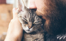 Man holding his cat. Learn how you pet a cat after a cat flea treatment.