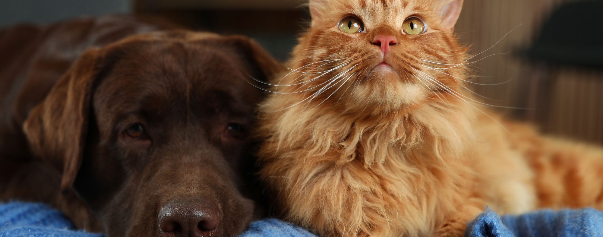 Dog and cat lying on the floor during the winter. You need to exercise your dog in the winter.