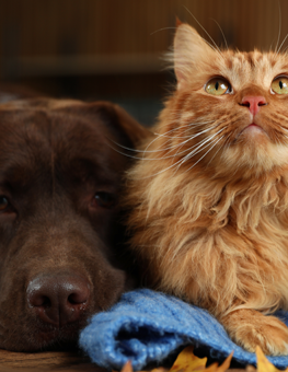 Dog and cat lying on the floor during the winter. Dogs and cats need exercise when the weather outside is cold.