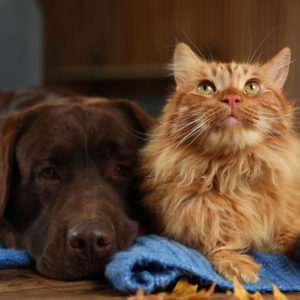 Dog and cat lying on the floor during the winter. You need to exercise your dog and cat in the winter.