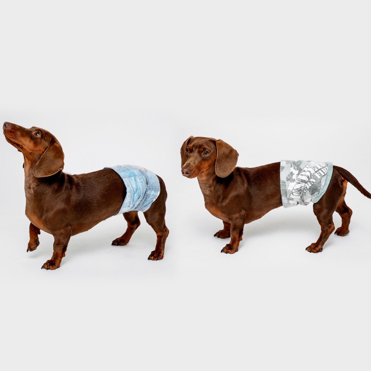 disposable male wraps for dogs are available in multiple sizes