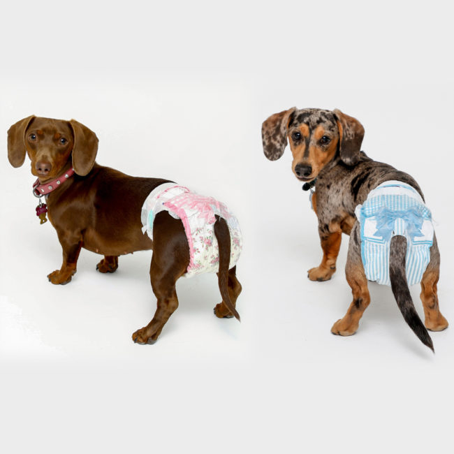 dogs wear small size dog diapers for travel, incontinence and puppy training