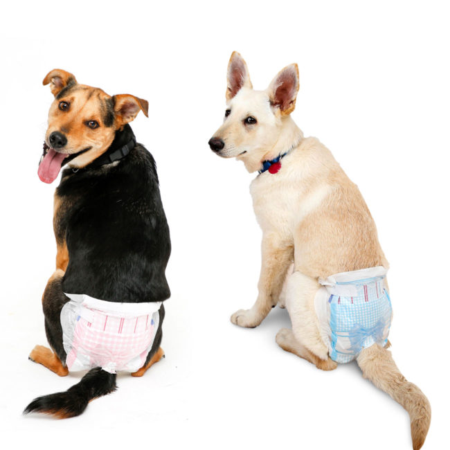 dogs wear dog diapers for travel, incontinence and puppy training