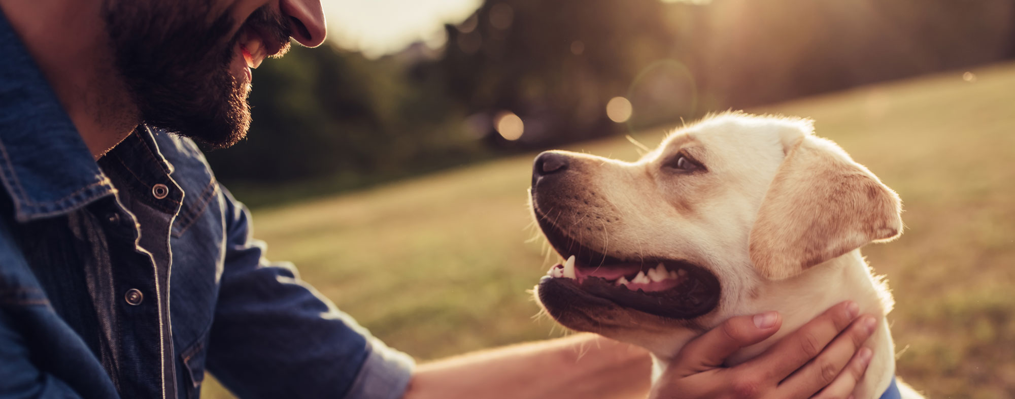 Man petting dog. What are the symptoms of coronavirus in dogs?