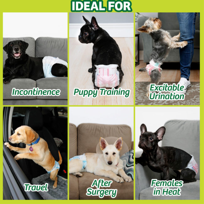 Hartz disposable dog diapers. Learn more about female dog diapers and disposable dog diaper from Hartz.