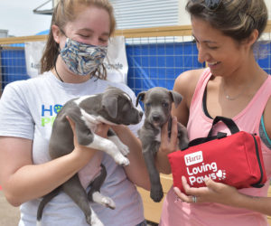 Volunteers at Houston Pets Alive! display puppies for adoption and shelter protection packs donated by Hartz Loving Paws.