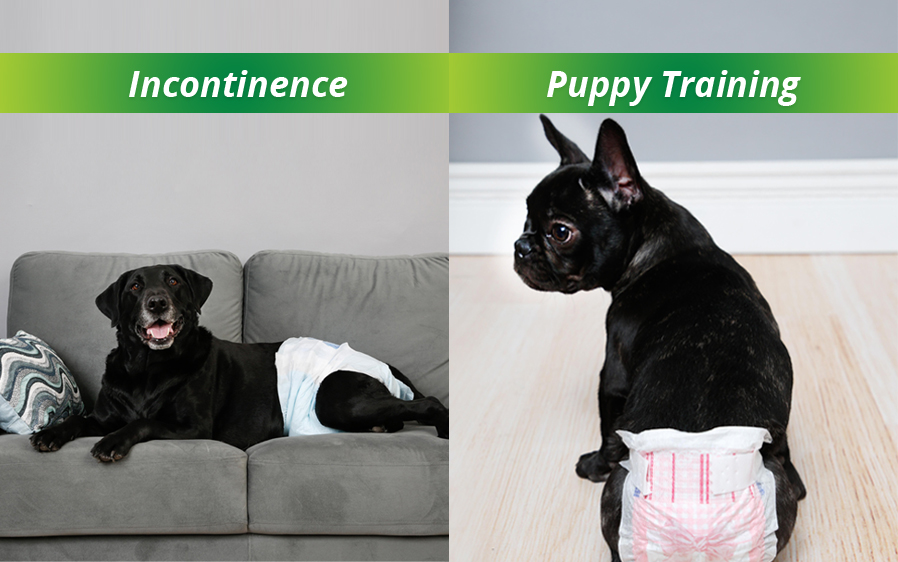 Hartz disposable dog diapers for female dogs. Use disposable dog diapers for dog incontinence and puppy training.