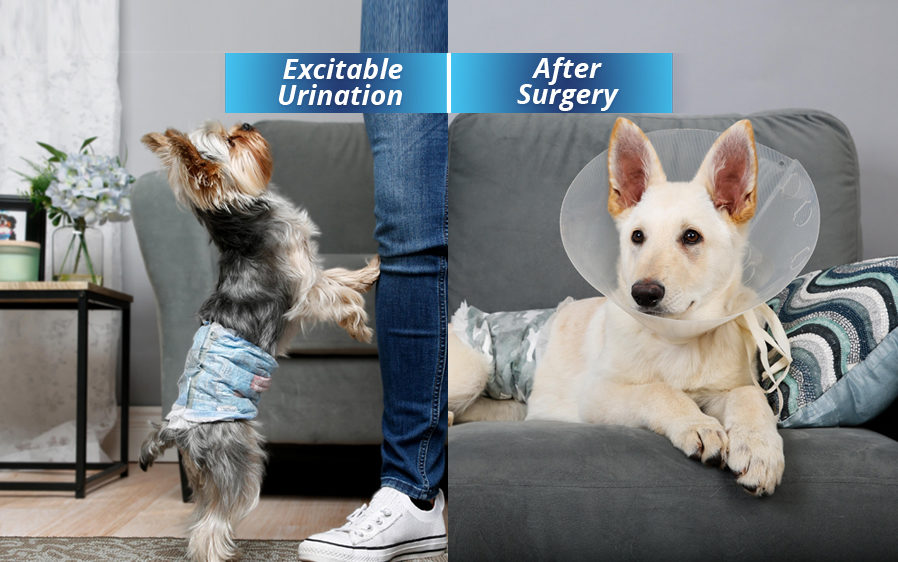 Hartz disposable dog diapers for female dogs. Use disposable dog diapers to control excitable urination in dogs and to aid dogs after surgery.