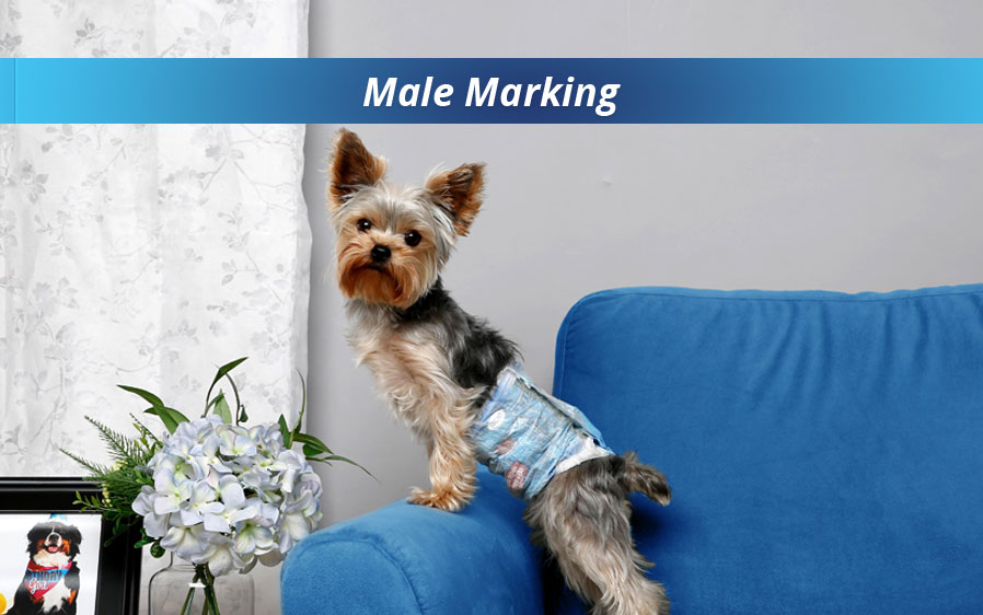 Hartz disposable male wraps for dogs. Use male wraps for dogs to prevent male marking around the home.