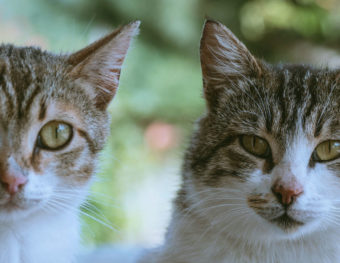 Adopting cats or kittens in pairs is good for cat bonding.