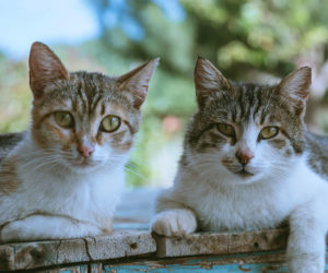 A pair of cats. Learn more about adopting kittens in pairs and kitten adoption.
