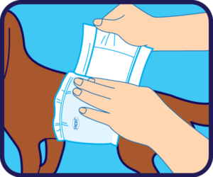 How to use a disposable male wrap for dogs, step two.