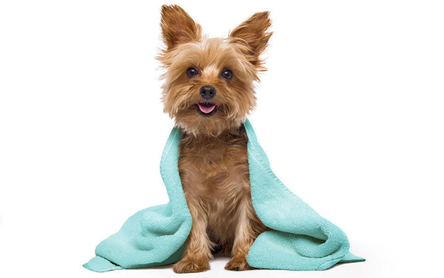 Dog drying with towel. Hartz Groomer's Best shampoos were the winner of the 2018 Women's Choice Award for Most Recommended Dog Shampoo.