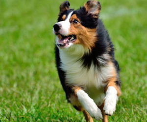 Dog running in the grass. Learn more about dog depression symptoms.