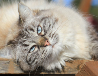 Cat lying on porch in the summer sun. Protect your cat from summer heat.