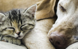 Kitten and dog sleeping next to each other. Learn more about cats and dogs living together.