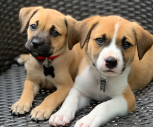 Foster dogs. Get more tips on fostering shelter and rescue dogs.
