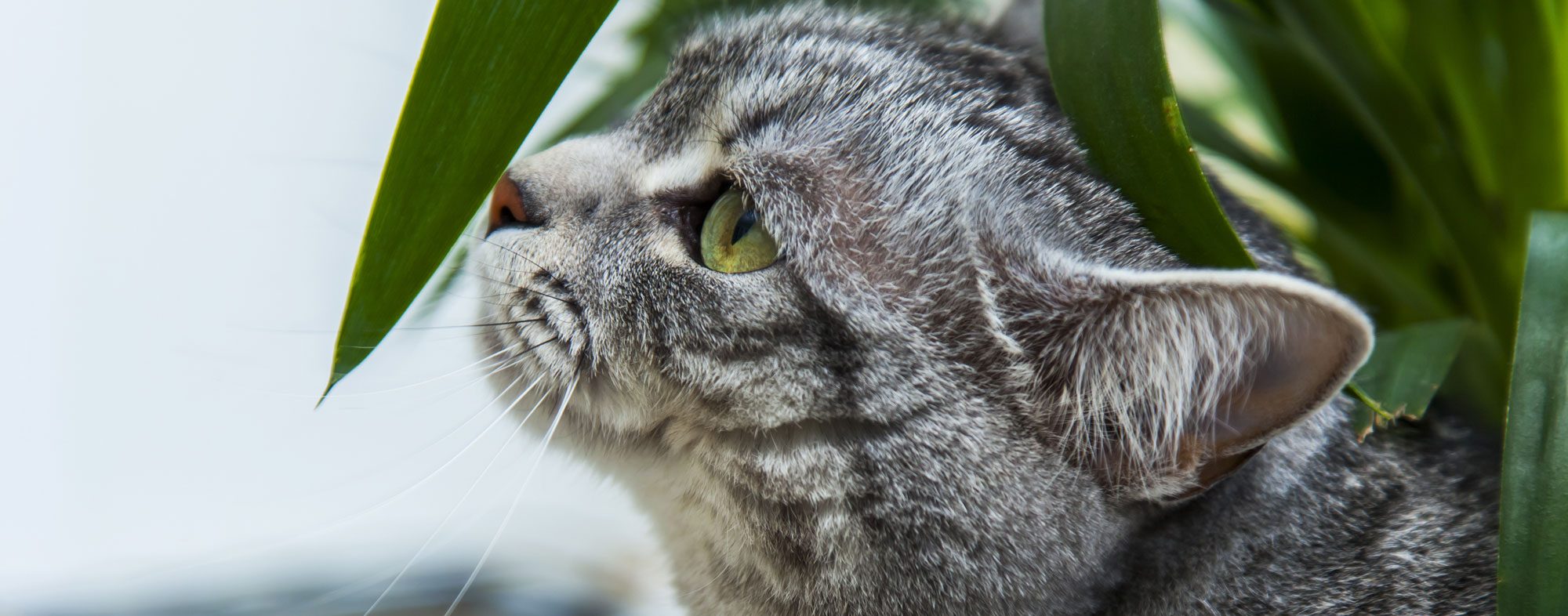 Curious cat near the leaf of a house plant. Learn more about pet friendly indoor plants.