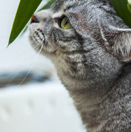 Cat sniffing the leaf of a houseplant. Keep your pets safe with pet friendly plants.