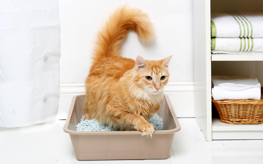 Cat in a cat litterbox of kitty litter. Hartz offers multiple types of cat litter for your cat.
