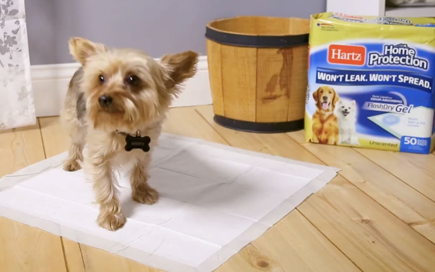 Hartz Home Protection dog pads. Video.