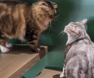 Two cats on the stairs. Learn about how to introduce two cats.