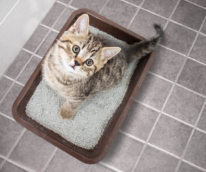 Cat in litter box. What is your cat trying to tell you?