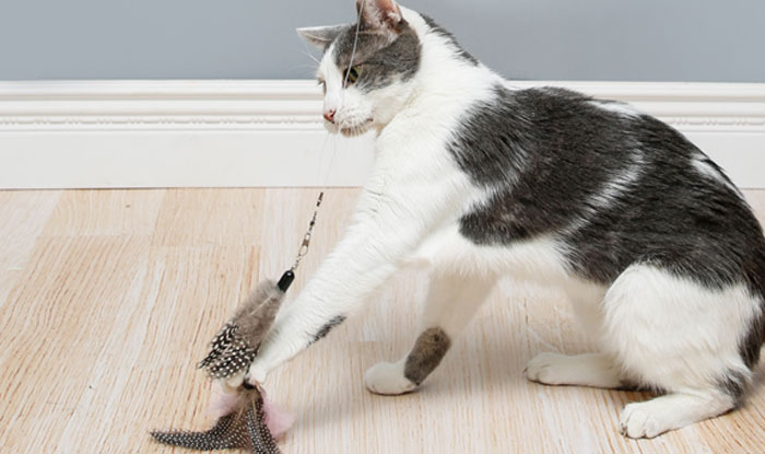 Cat interacting with the Hartz Captivate Fly 'N' Fish™ Cat Toy with Silver Vine and Catnip