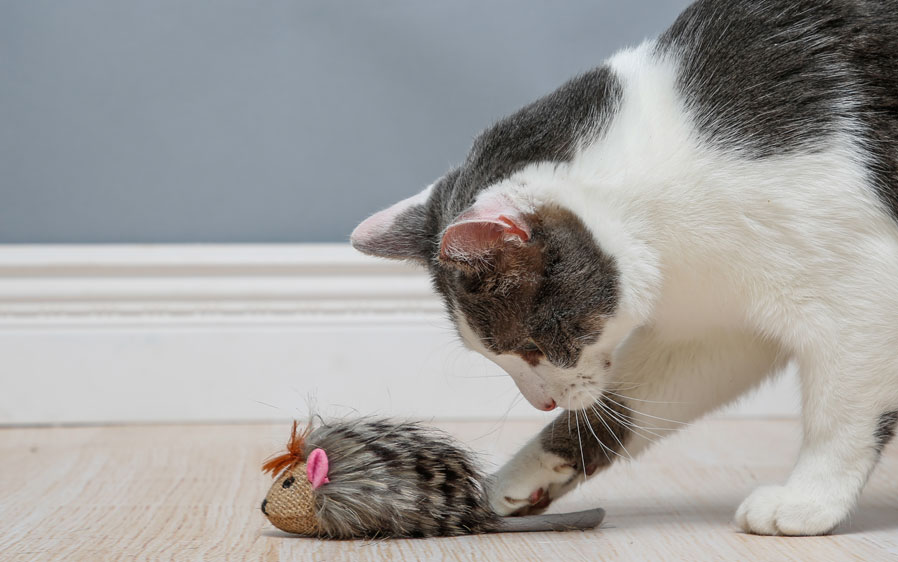 Cat playing with Hartz Captivate Shakin Hedgehog cat with silver vine and catnip.