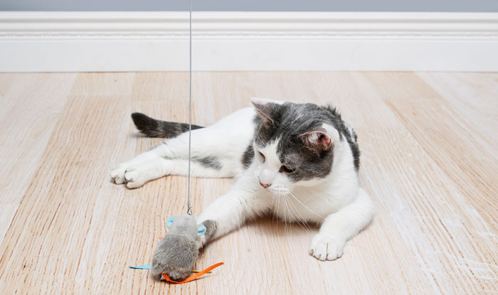 Cat playing with Hartz Captivate FlexiWand Cat Toy with Silver vine and catnip.