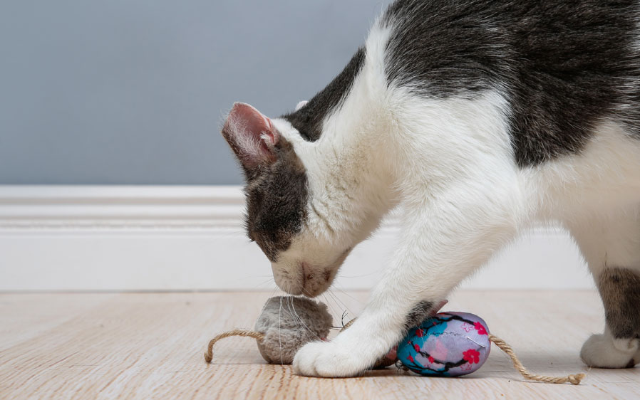 Cat playing with Hartz Captivate Three Fine Mice cat toy with silver vine and catnip.