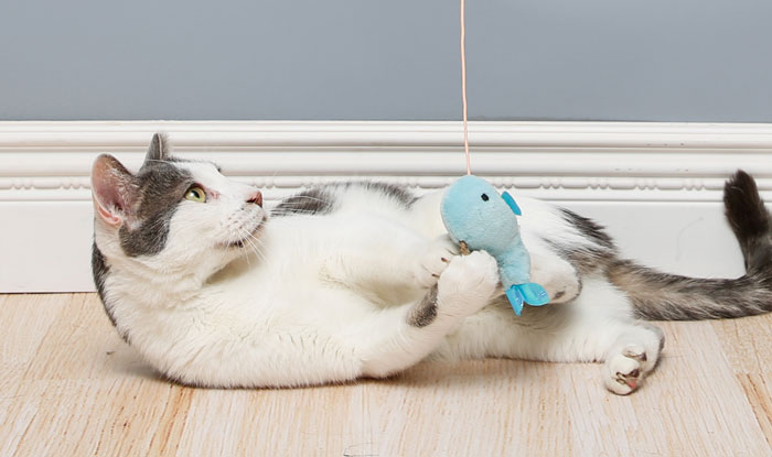 Cat playing with whale watch cat toy. A cat toy containing silver vine and cat nip.