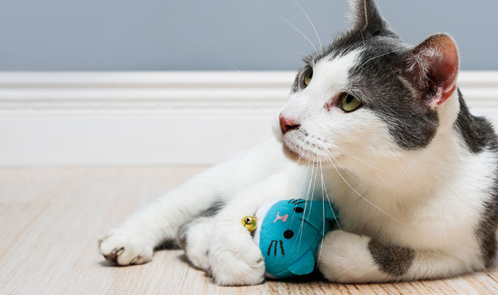 Cat relaxing with a captivate dyna mice cat toy with silver vine and catnip.