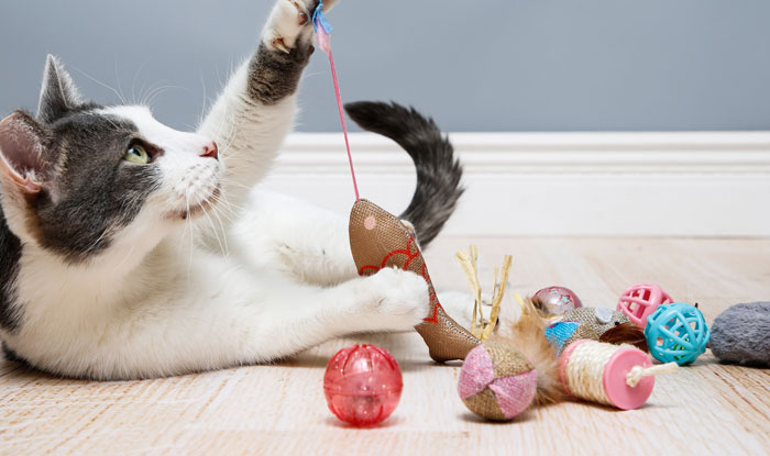 Cat playing with a variety of Captivate cat toys.