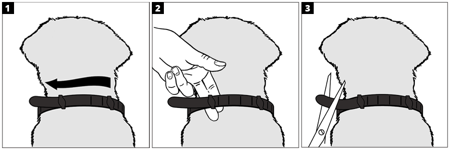 Visual directions for using one of the Hartz ProMax flea and tick collars for dogs.