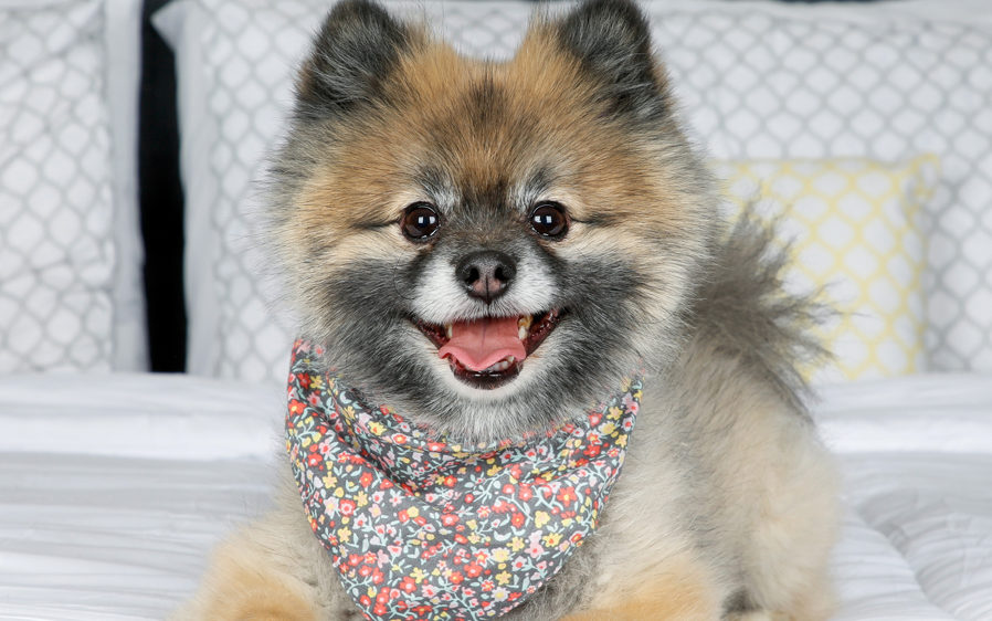 fur fetcher de-shedding tools are appropriate for these dog and cat breeds.