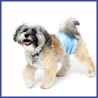 Hartz male wraps for dogs provide a secure fit for your pet.